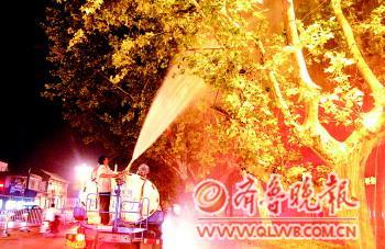 刘守善/图为工作人员在对法桐树喷洒农药。刘守善摄