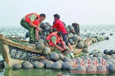 """荣成 山东/台风""""梅花""""登陆荣成沿海,给沿海渔业养殖带来了巨大损失。"""